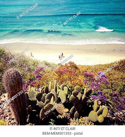 Cacti growing on cliffs overlooking beach