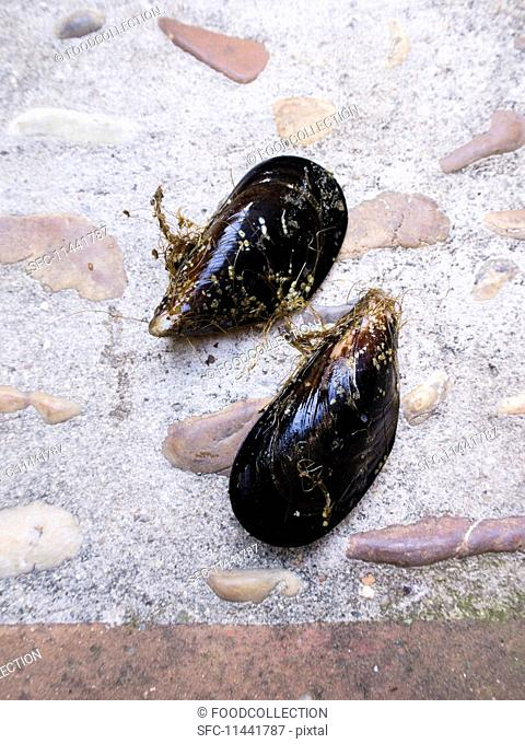 Fresh mussels on a stone surface