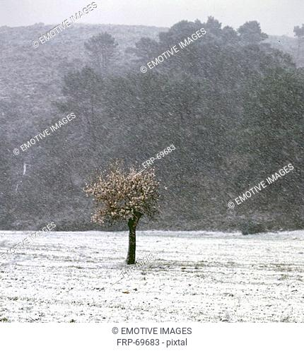 snow over open field