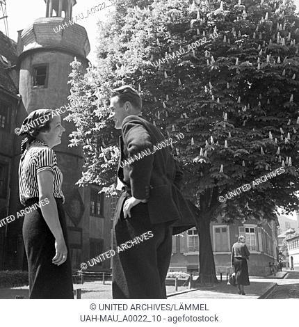 Blühende Kastanie in Neustdt an der Haardt, Deutschland 1930er Jahre. Chestnut tree in blossom time Neustadt / Haardt, Germany 1930s
