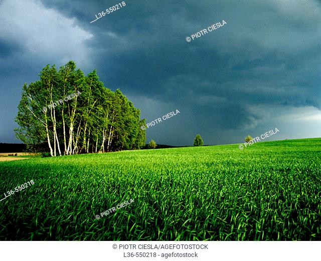 Spring in the field. Podlasie region, Eastern Poland