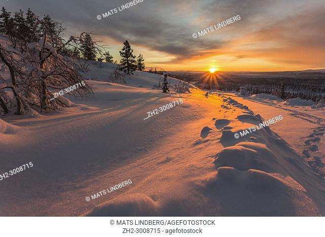 Winter landscape in direct light at sundown with snowy birch and spruce trees and nice color in the sky, Gällivare, Swedish Lapland, Sweden