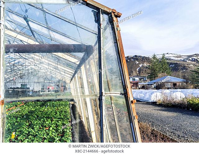 Hothouses, greenhouses in Hveragerdi in winter. They are heated by geothermal energy and supply a large part of the icelandic demand of vegetables like tomatoes...