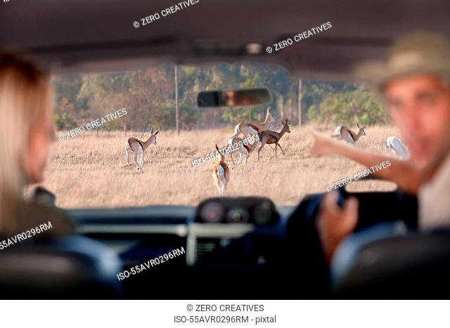 People looking at wildlife through windscreen, Stellenbosch, South Africa