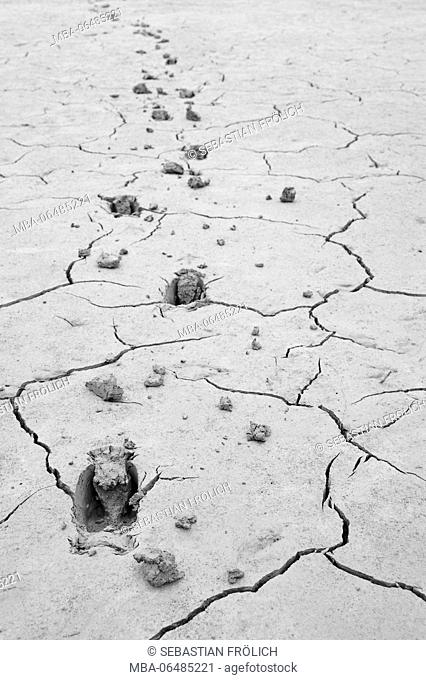 Deer tracks in the mud of a parched lakeside
