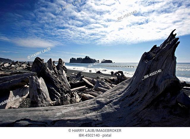 Driftwood at Rialto Beach near La Push, Forks, Olympic National Park, Washington, USA