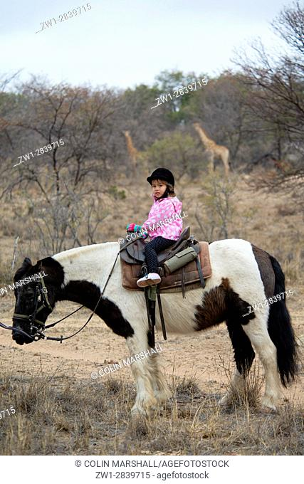 Young girl (model released) horseriding with pair of giraffes (Giraffa camelopardalis) in background, Ant's Hill Reserve, near Vaalwater, Limpopo province