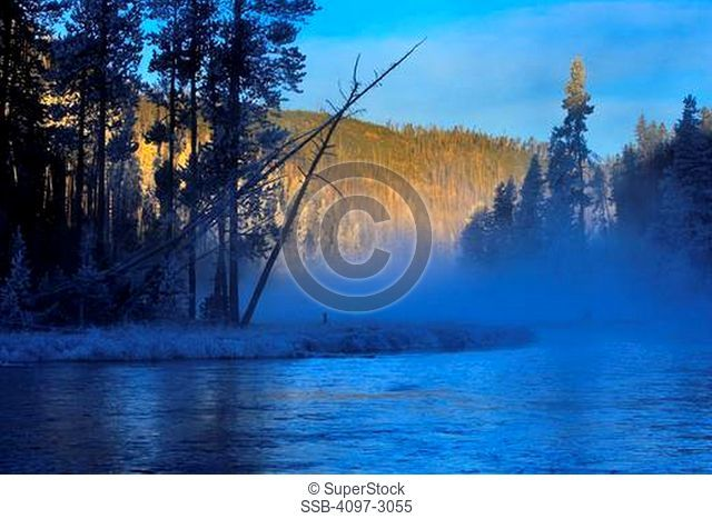 River flowing through a forest, Firehole River, Yellowstone National Park, Wyoming, USA