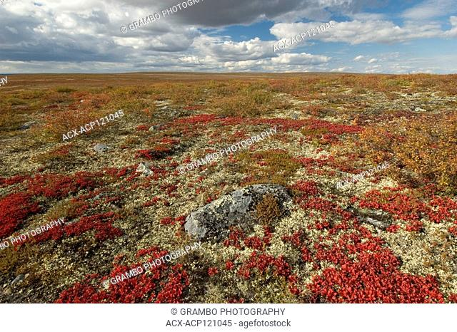 Autumn tundra near Whitefish Lake, Northwest Territories, Canada