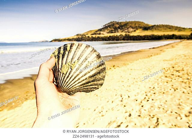 Travelling tourists in detail with male hand examining the intricate lines and sandy details of a scallop shell found on a Southern Tasmanian seaside