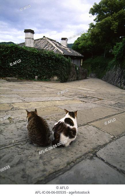 Two cats sitting on stone Pavement