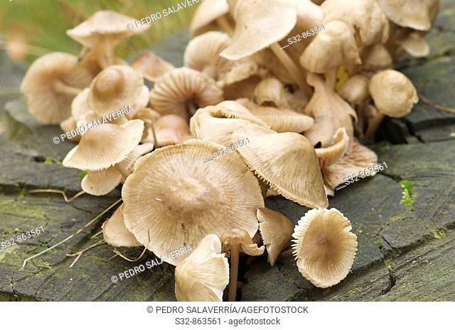 mushrooms group