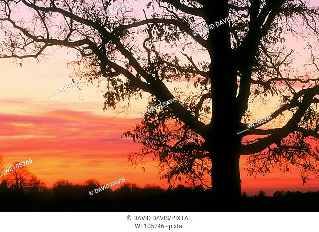 Beautiful sunrise showing a sihouetted tree