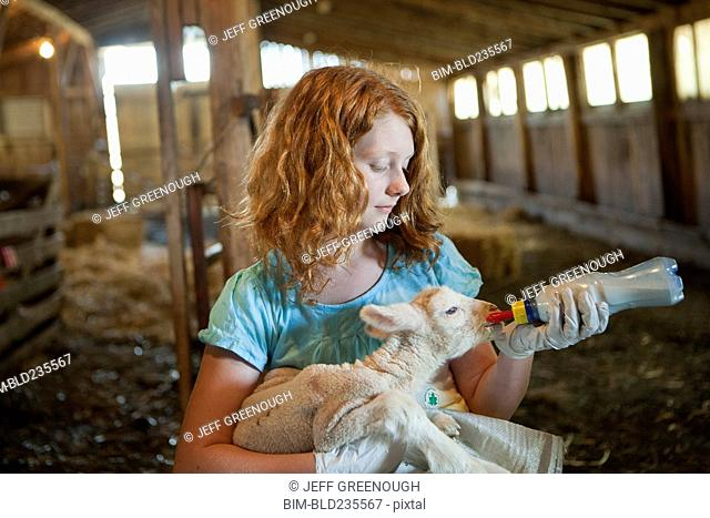Caucasian girl feeding bottle to lamb