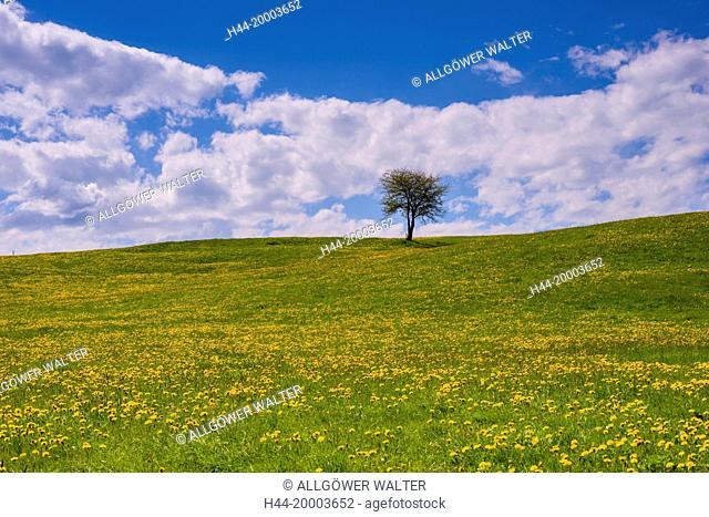 meadow in Bavaria