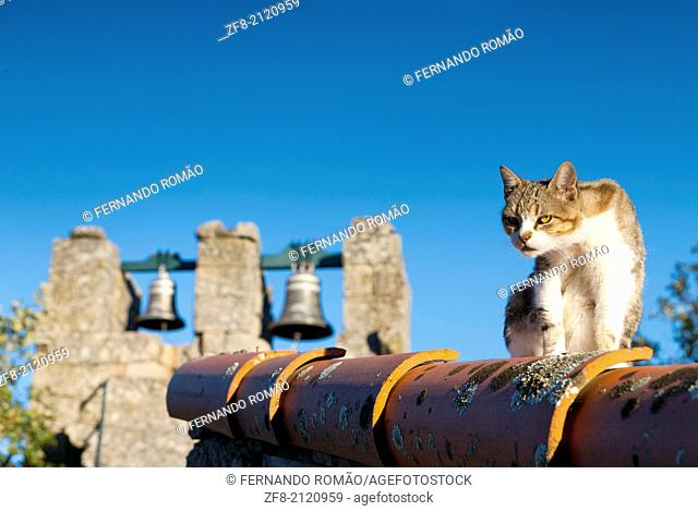 Staring cat on the house's roof, at Sortelha - Portugal