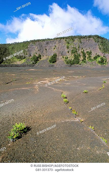 Ferns emerging from cracks in the crater surface along the Kilauea Iki Trail. Hawaii Volcanoes National Park. The Big Island. Hawaii. USA