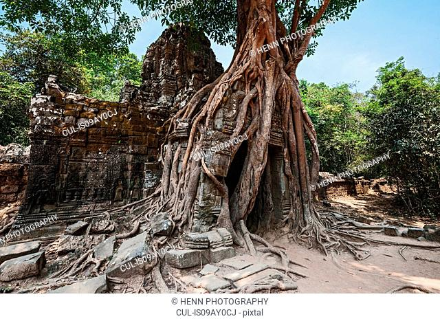 A tree growing over an ancient temple close to Angkor Wat, Siem Reap, Cambodia