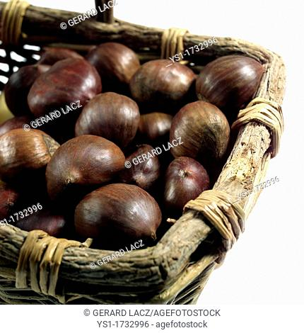 Chestnuts, castanea sativa, Fruits against White Background