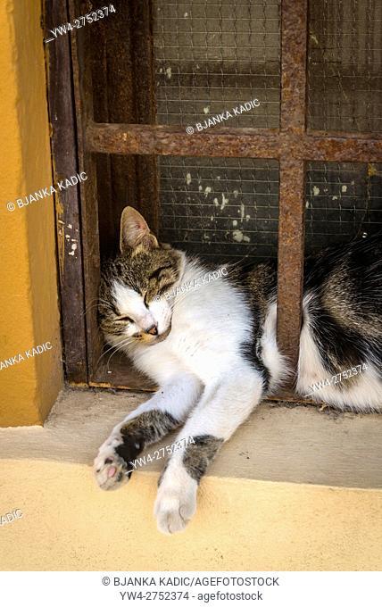 Cat sleeping behind the bars of a window, Krk, Croatia