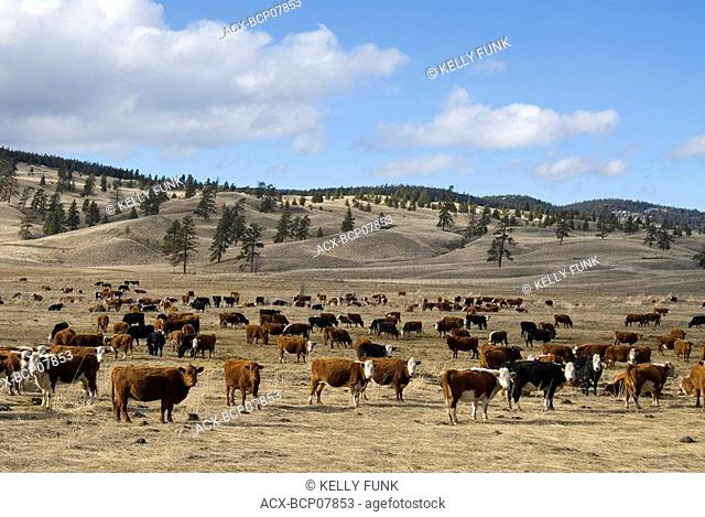 Nicola Ranch, British Columbia, Canada