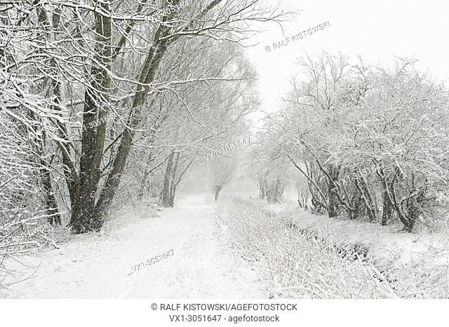 Onset of winter, snow fall, hiking path leading through the old rhine sling along a small brook, near Duesseldorf, Germany