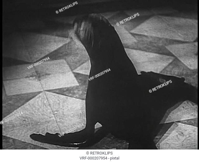 Seal on floor nodding his head