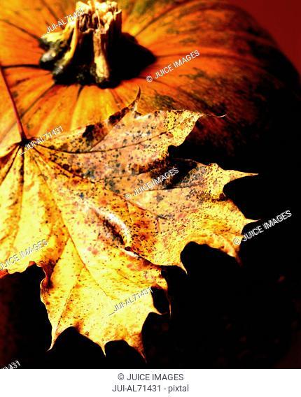 Still life view of a pumpkin and an autumn leaf