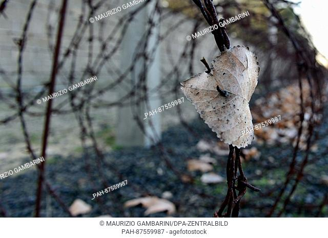 A leaf caught in the barb wire fence can be seen on the grounds of the memorial of the Sachsenhausen concentration camp in Oranienburg, Germany, 27 January 2017