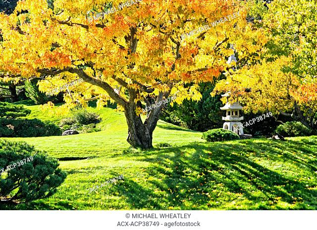 Fall colour, Nikka Yuko Japanese Garden, Lethbridge, Alberta, Canada