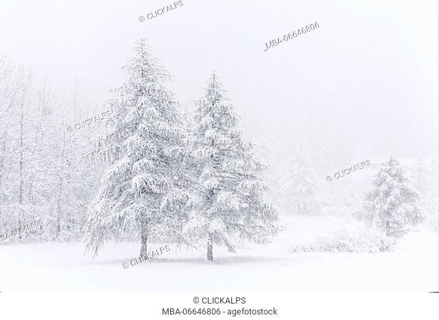 Chisone Valley (Valle Chisone), Turin province, Piedmont, Italy, Europe. Blizzard landscapes into Piedmont mountains