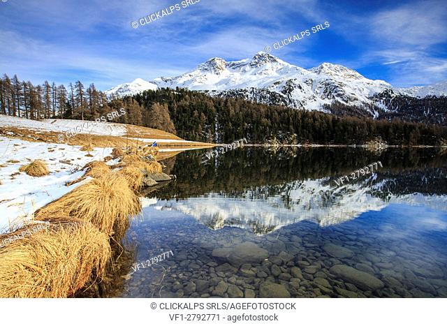 Snowy peaks and woods are reflected in the clear water Lake Silvaplana Maloja Canton of Graubünden Engadine Switzerland Europe