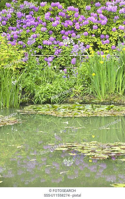 The Gardens at Giverny with Monet's Bridge and waterlillies, Giverny, France