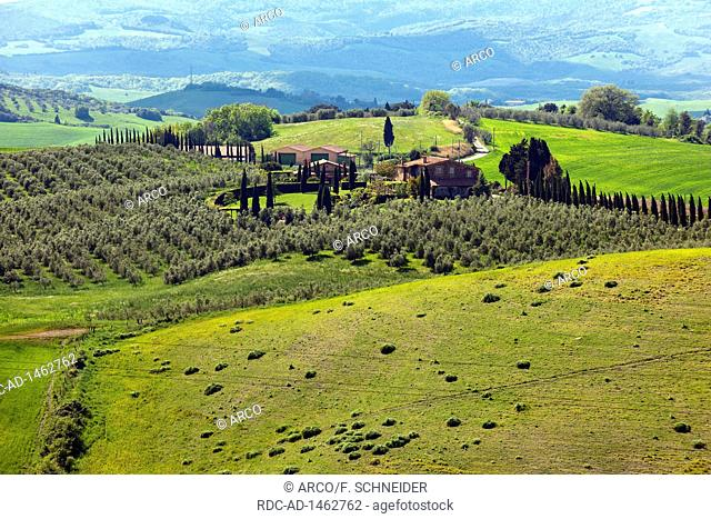 Tuscany landscape with cypresses and olive trees, Tuscany, Italy, Europe, Cupressus sempervirens,, Olea europaea