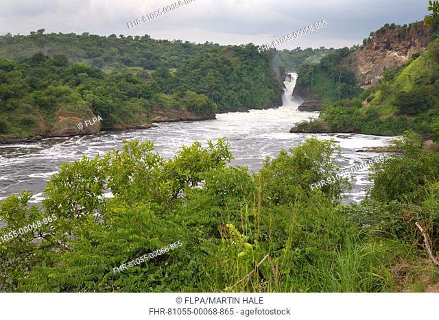 View of river and waterfall, Murchison Falls, White Nile, Murchison Falls N.P., Uganda, June