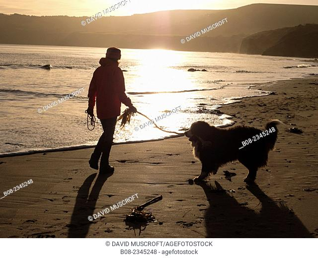 woman playing with a Bernese Mountain Dog on the beach,Robin Hoods Bay, Yorkshire,Britain