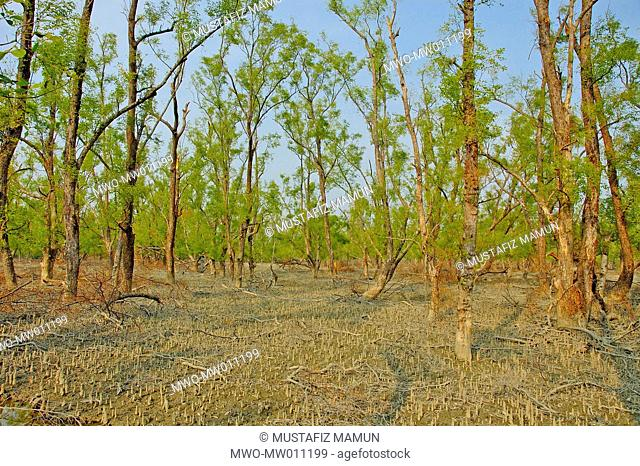 The Sundarbans, a UNESCO World Heritage Site and a wildlife sanctuary The largest littoral mangrove forest in the world, it covers an area of 38,500 sq km