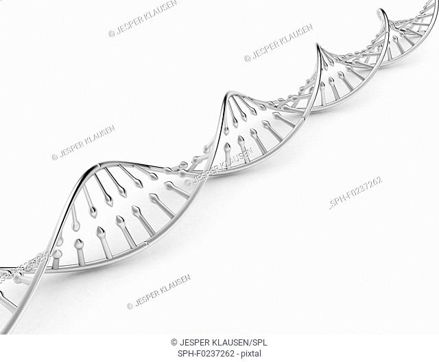 DNA model, illustration