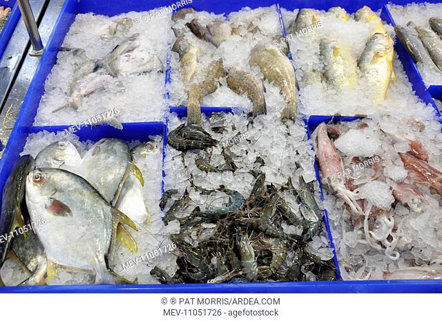 Marine Fish with squid and shrimps on ice at fishmongers