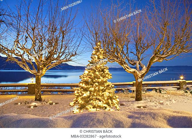 Christmas tree at the lake Kochelsee, terrace at the sea hotel 'Grauer Bär', Kochel am See, Upper Bavaria, Bavaria, Germany
