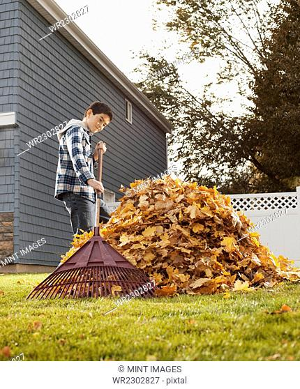 A boy raking in a huge pile of autumn leaves