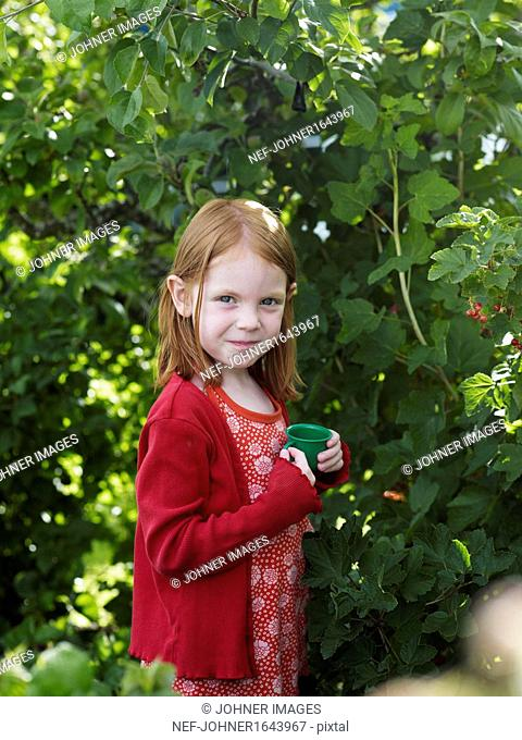 Girl picking red currants in garden