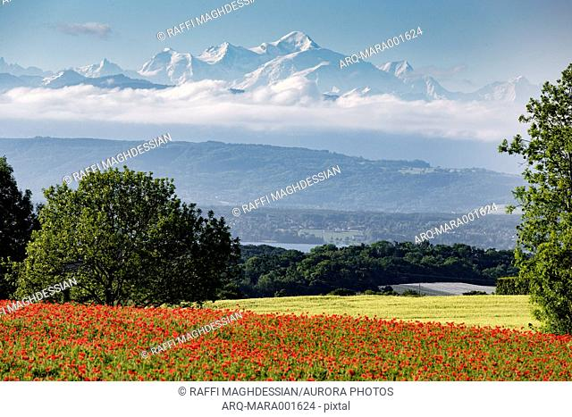 Landscape of Mont Blanc with red poppies, Givrins, Switzerland