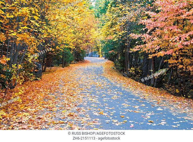 Fall color along the Mirror Lake road, Yosemite Valley, Yosemite National Park, California USA