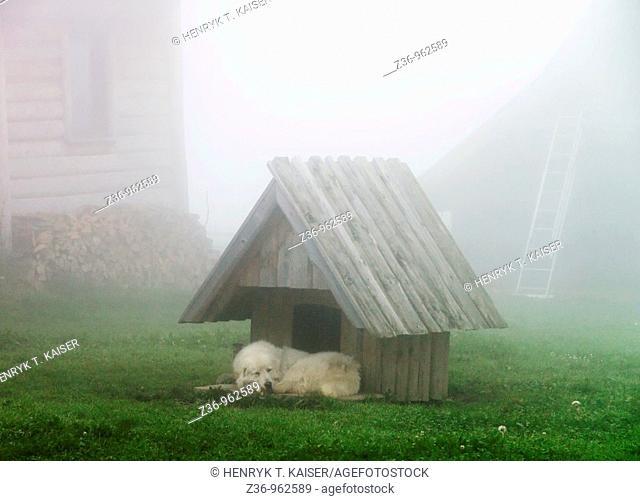 Foggy morning, Podhale, Poland