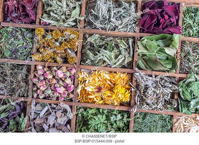 Assortment of dried herbal plant for tea in a wooden case box