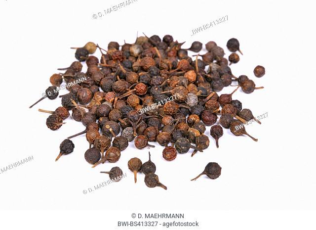 Cubeb pepper, Tailed Pepper (Piper cubeba), dried fruits