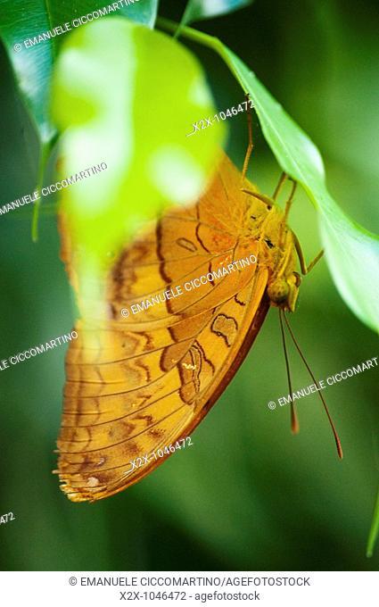 Butterfly Farm, Wilberforce, New South Wales, Australia