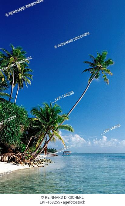 Beach with Palm Trees, Maldives, Indian Ocean, Medhufushi, Meemu Atoll