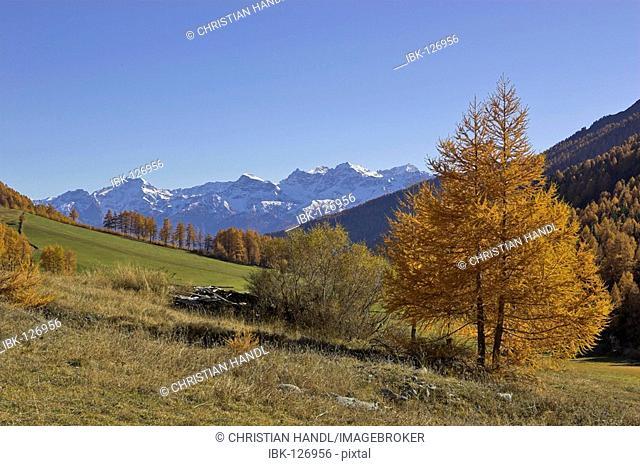 Mountain range Saldurkamm on the hike to the Schlininger alp, Upper Vinschgau, South Tyrol, Italy